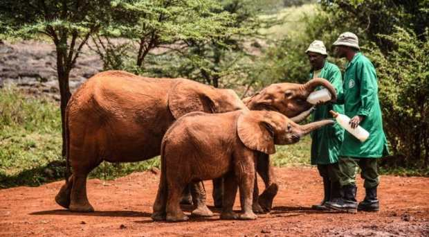 David-Sheldrick-Wildlife-Trust-870x480